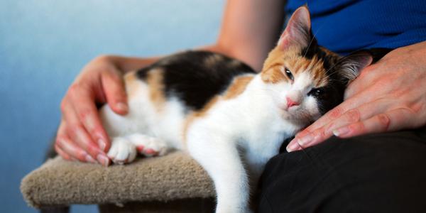 Adopt A Pet Rspca South Australia