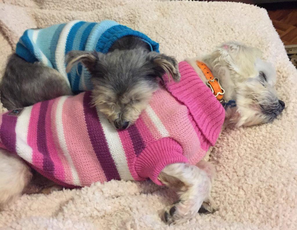 Oscar and Daisy together