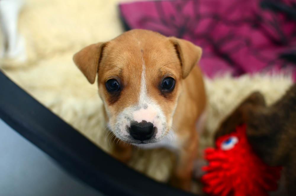 Dog and cat welfare - RSPCA South Australia