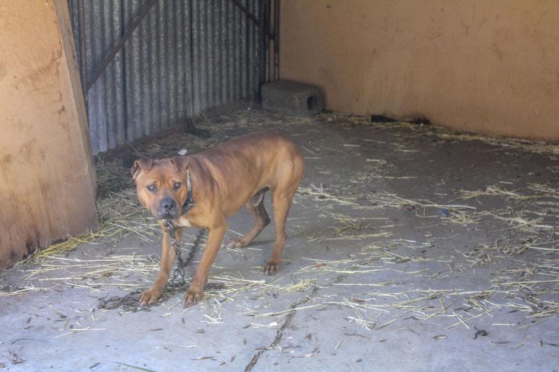 Dog fighting prosecution case 2018-3