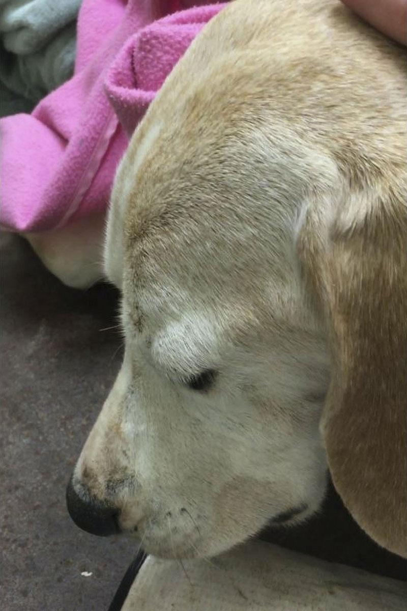 Maddy dog prosecution May 2018