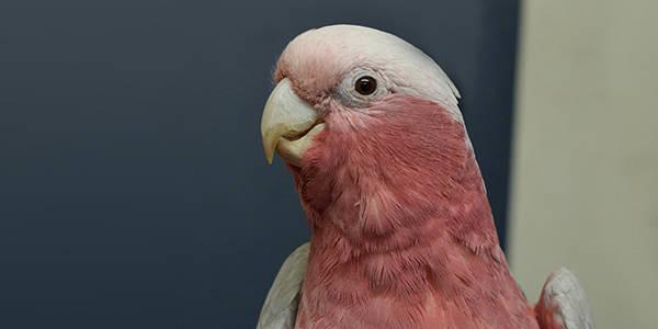 Birds - RSPCA South Australia