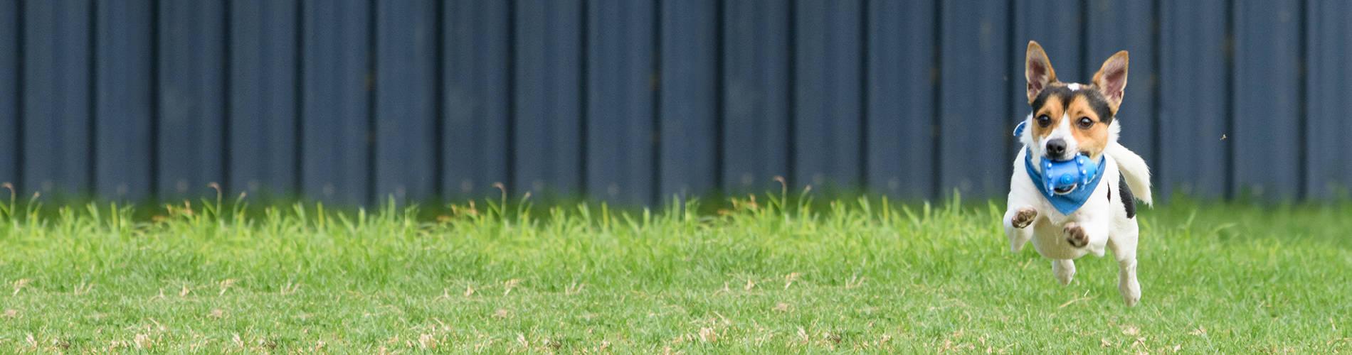 Dogs - RSPCA South Australia