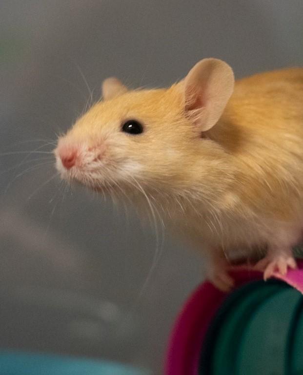 Pocket pets - RSPCA South Australia