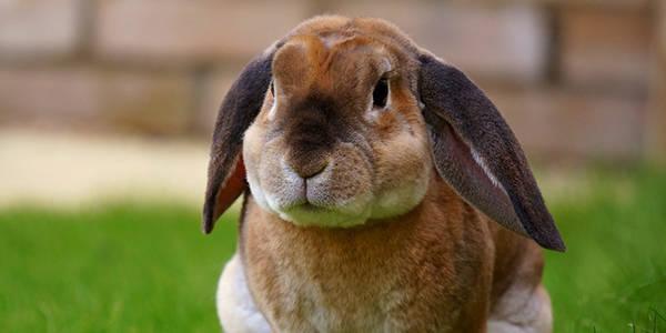 Rabbits - RSPCA South Australia