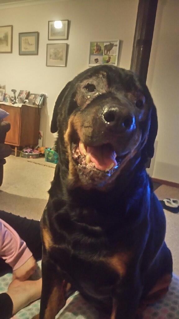 bear-smiling