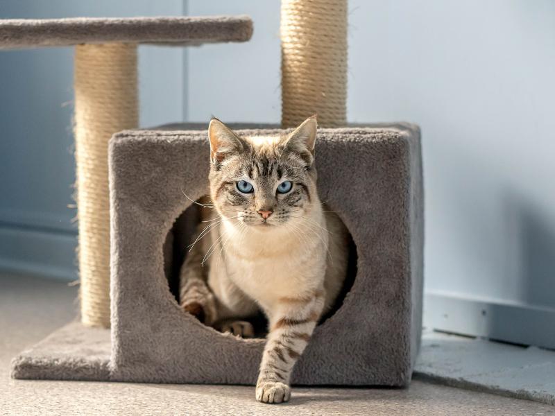 Cat in scracthing post